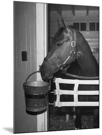 Citation in Stall-Tony Linck-Mounted Photographic Print