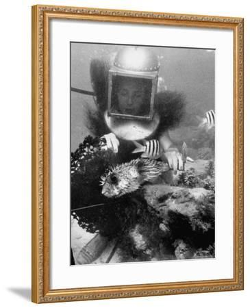 Diver Meddling Around with a Blowfish in Hartley's Underwater Movie in Bermuda-Peter Stackpole-Framed Photographic Print