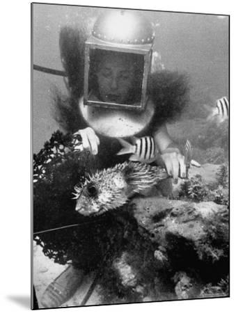 Diver Meddling Around with a Blowfish in Hartley's Underwater Movie in Bermuda-Peter Stackpole-Mounted Photographic Print