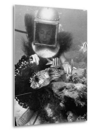 Diver Meddling Around with a Blowfish in Hartley's Underwater Movie in Bermuda-Peter Stackpole-Metal Print