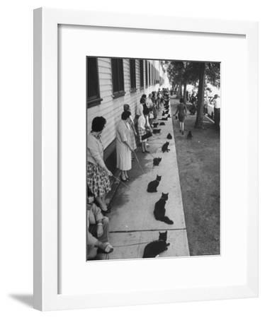 """Owners with Their Black Cats, Waiting in Line For Audition in Movie """"Tales of Terror""""-Ralph Crane-Framed Photographic Print"""