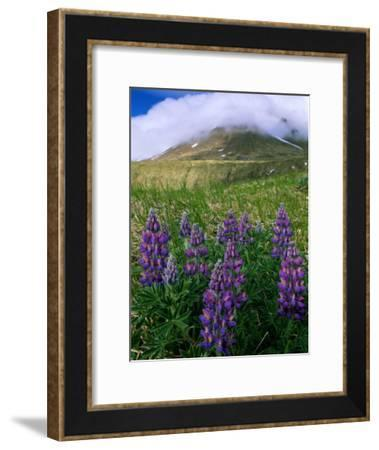 Beautiful Flowers Spring up Around the Base of a Mountain-Barry Tessman-Framed Photographic Print