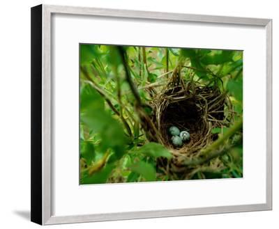 Bird Nest with Eggs-James P^ Blair-Framed Photographic Print