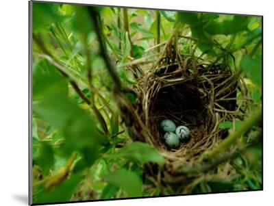 Bird Nest with Eggs-James P^ Blair-Mounted Photographic Print
