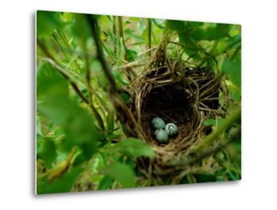 Bird Nest with Eggs-James P^ Blair-Metal Print