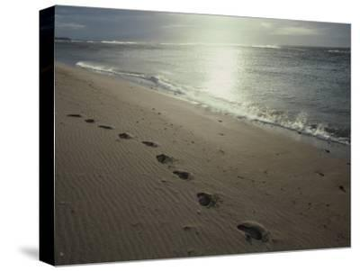 Footprints in the Sand on a Beach-Todd Gipstein-Stretched Canvas Print