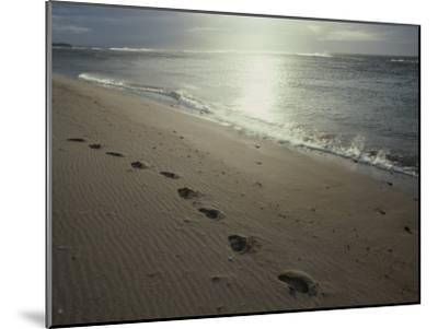 Footprints in the Sand on a Beach-Todd Gipstein-Mounted Photographic Print