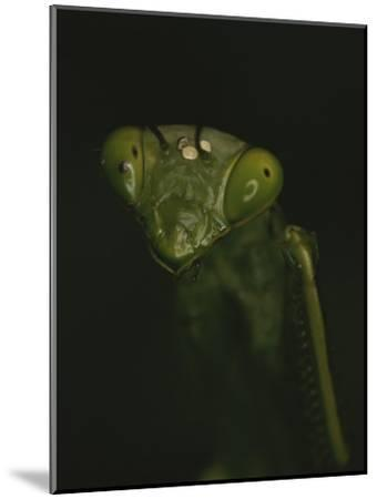 Close View of a Praying Mantis-Michael Melford-Mounted Photographic Print