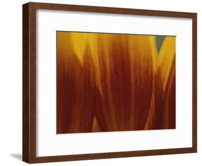 A Close View of the Petals of a Sunflower-Raul Touzon-Framed Photographic Print