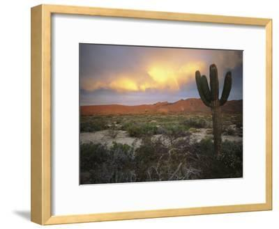 A Lone Cactus in a Desert Scene-Ed George-Framed Photographic Print