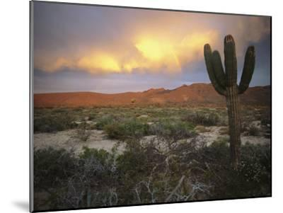 A Lone Cactus in a Desert Scene-Ed George-Mounted Photographic Print