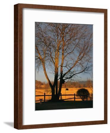 Cherry Tree in Waynesboro, Pennsylvania-Raymond Gehman-Framed Photographic Print