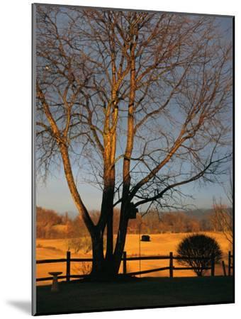 Cherry Tree in Waynesboro, Pennsylvania-Raymond Gehman-Mounted Photographic Print