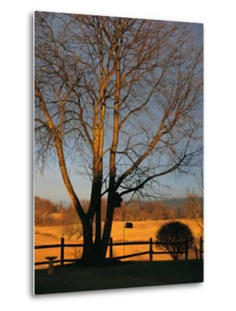 Cherry Tree in Waynesboro, Pennsylvania-Raymond Gehman-Metal Print