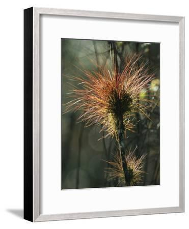 Air Plants Adorn a Tree in South Florida-Klaus Nigge-Framed Photographic Print