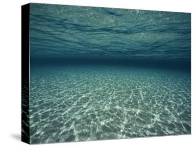 Underwater View-Bill Curtsinger-Stretched Canvas Print