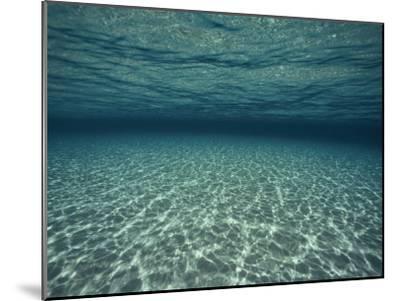 Underwater View-Bill Curtsinger-Mounted Photographic Print