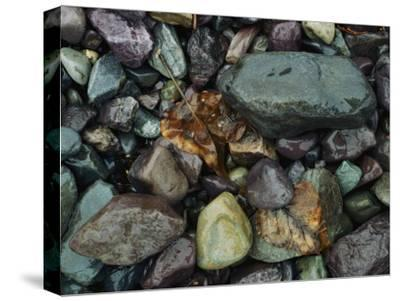 Rocks and Dead Leaves-Sam Abell-Stretched Canvas Print