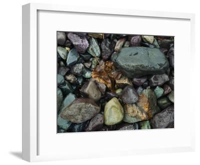 Rocks and Dead Leaves-Sam Abell-Framed Photographic Print