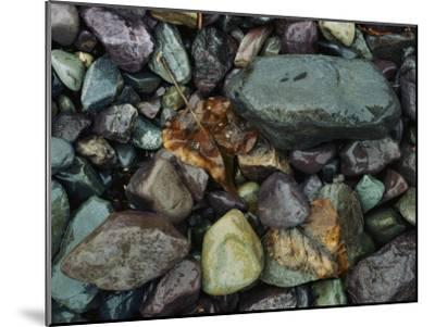Rocks and Dead Leaves-Sam Abell-Mounted Photographic Print