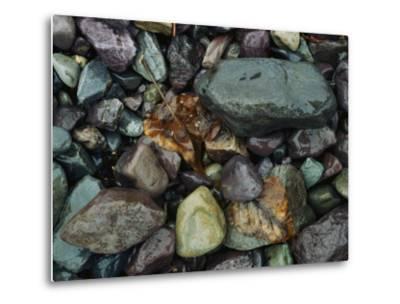 Rocks and Dead Leaves-Sam Abell-Metal Print