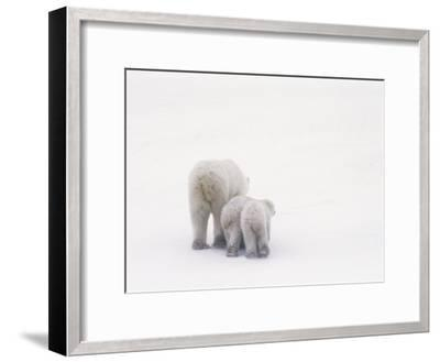 Rear View of a Polar Bear and Her Two Cubs-Norbert Rosing-Framed Photographic Print