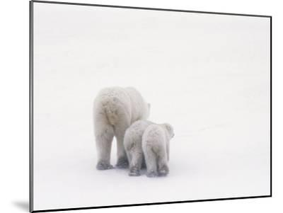 Rear View of a Polar Bear and Her Two Cubs-Norbert Rosing-Mounted Photographic Print