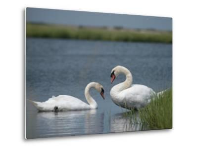 Swans in a Pond-James L^ Stanfield-Metal Print