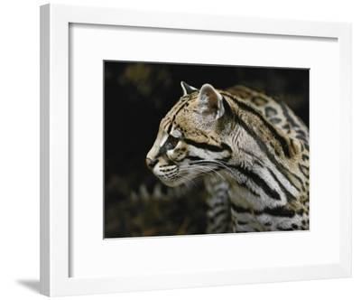 An Ocelot-Jason Edwards-Framed Photographic Print