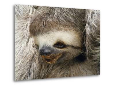 Close Portrait of a Three Toed Sloth-Darlyne A^ Murawski-Metal Print