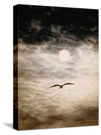 A Silhouetted Frigate Bird Takes Flight in a Stangely Lit Daytime Sky-Paul Chesley-Stretched Canvas Print