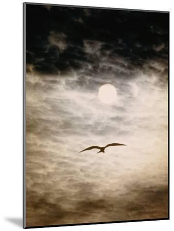 A Silhouetted Frigate Bird Takes Flight in a Stangely Lit Daytime Sky-Paul Chesley-Mounted Photographic Print