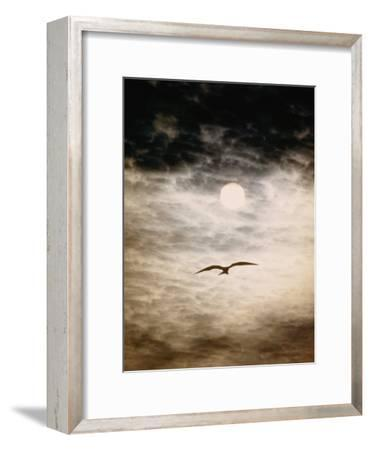 A Silhouetted Frigate Bird Takes Flight in a Stangely Lit Daytime Sky-Paul Chesley-Framed Photographic Print