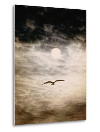 A Silhouetted Frigate Bird Takes Flight in a Stangely Lit Daytime Sky-Paul Chesley-Metal Print