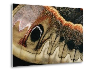 A Close up of a Cecropia Moths Wing-Darlyne A^ Murawski-Metal Print