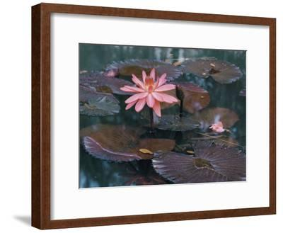 Water Lily Plants-B^ Anthony Stewart-Framed Photographic Print