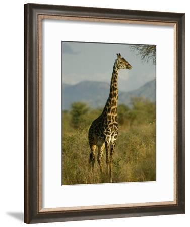 A Giraffe in the Wild-Michael Fay-Framed Photographic Print