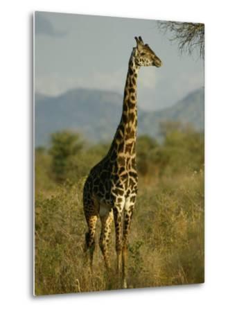 A Giraffe in the Wild-Michael Fay-Metal Print