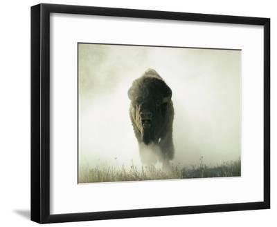 Bison Kicking up Dust-Lowell Georgia-Framed Photographic Print