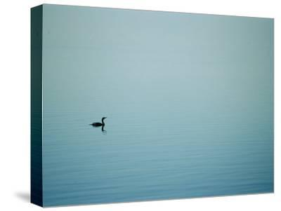 A Lone Cormorant Drifts on a Fog-Shrouded Lake-Stephen St^ John-Stretched Canvas Print