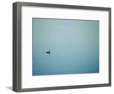 A Lone Cormorant Drifts on a Fog-Shrouded Lake-Stephen St^ John-Framed Photographic Print