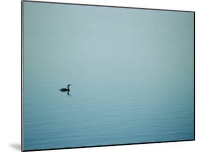 A Lone Cormorant Drifts on a Fog-Shrouded Lake-Stephen St^ John-Mounted Photographic Print