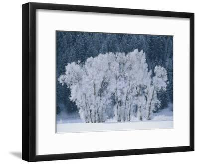 Cottonwood Trees with Frost Near Steamboat Springs, Colorado-Skip Brown-Framed Photographic Print