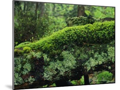 Woodland Mosses-Norbert Rosing-Mounted Photographic Print