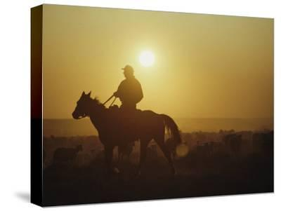 A Rancher Rounds up Sheep on a Wyoming Farm-Joel Sartore-Stretched Canvas Print
