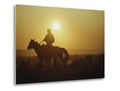 A Rancher Rounds up Sheep on a Wyoming Farm-Joel Sartore-Metal Print