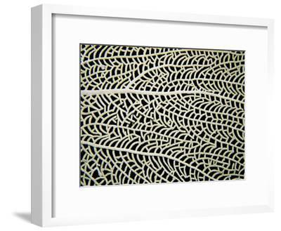 A Close View of a Sea Fan-Heather Perry-Framed Photographic Print
