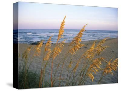 Beach Scene with Sea Oats-Steve Winter-Stretched Canvas Print