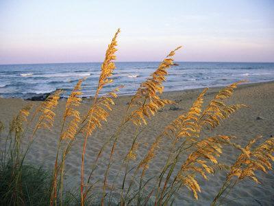 Beach Scene with Sea Oats-Steve Winter-Photographic Print