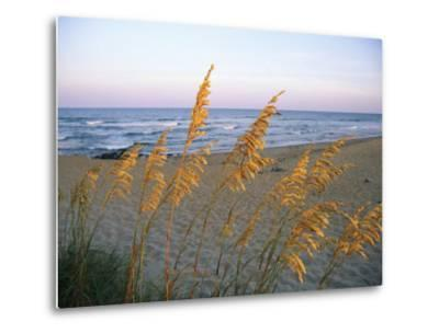 Beach Scene with Sea Oats-Steve Winter-Metal Print
